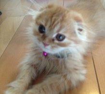 猫ばばぁと呼ばれたい