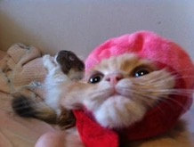 猫のIBD。。。その②