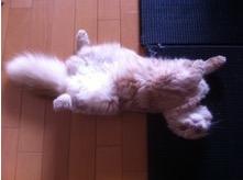寝るコは育つ、カプチーノ