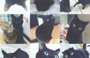 黒ねこさん。集まれ〜(≧▽≦)♡