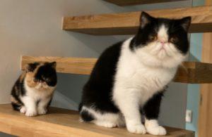 猫遠近法と、キャットサロン 年末年始のお休みについて