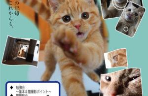 【終了】9・12★猫森カメラべんきょう&撮影会