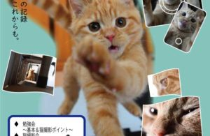 【定員になりました&開催延期】開催日未定★猫森カメラべんきょう&撮影会