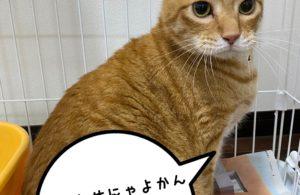 大人猫ジロちゃん。新しい家族様のもとへ