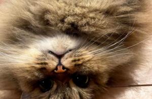 キャットサロン お知らせと、猫暮らし体験の様子