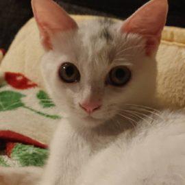 おっきい猫さんちび猫さん。家族さんに迎えられました