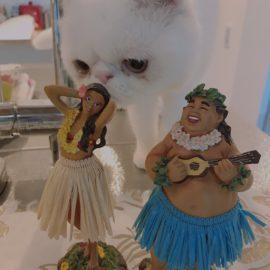 【報告】猫森ハワイアンダンス講座 〜はじめてのHula〜 を開催しました!