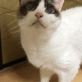 猫の慢性腎臓病の数値について